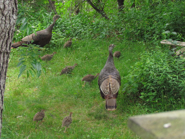 Turkeys and Poults1 6:19:14