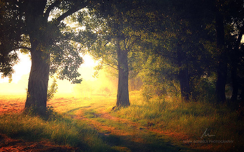 morning trees tree nature sunrise landscape golden hungary gyirmót