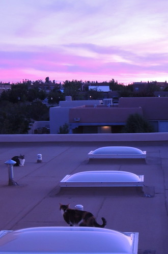 Cats on the Roof at Sunrise