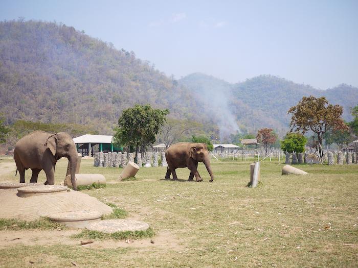 Elephant Nature Park Chiang Mai-17