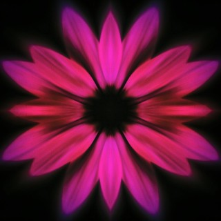 Flower #flower #color