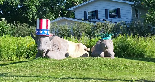 Bison of Liberty, Midvale Heights, Madison