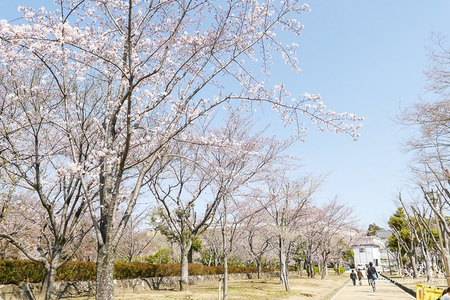 0331D6姬路、神戶_76