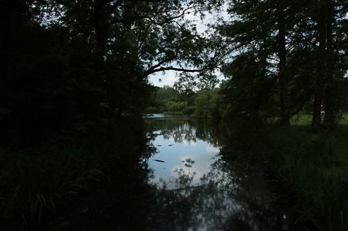 Vondelpark: uno dei tanti laghetti