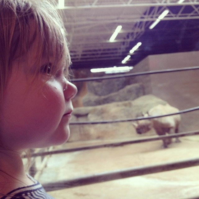 Maddy and her rhino friend (at the Columbus Zoo).