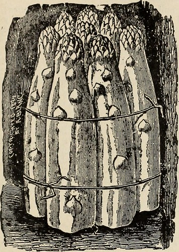 Image from page 4 of