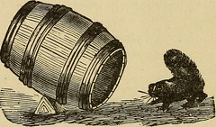 """Image from page 301 of """"Blakelee's industrial cyclopedia, a simple practical guide ... A ready reference and reservoir of useful information. More than two hundred illustrations"""" (1889)"""