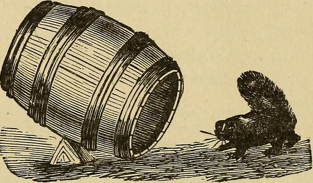"Image from page 301 of ""Blakelee's industrial cyclopedia, a simple practical guide ... A ready reference and reservoir of useful information. More than two hundred illustrations"" (1889)"