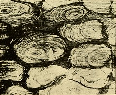 """Image from page 242 of """"Relics of primeval life, beginning of life in the dawn of geological time"""" (1897)"""