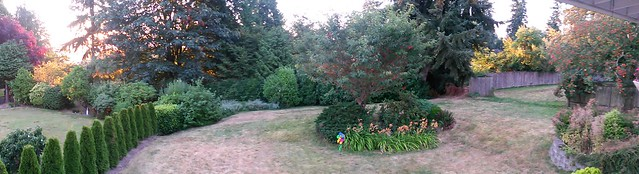 Yard pano. We need rain.