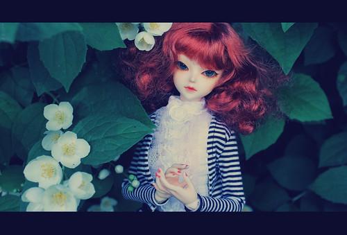 Among the jasmine