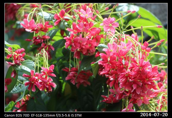 20140720_flowers