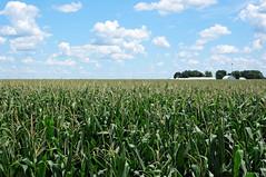 flower(0.0), soil(0.0), wheat(0.0), grass(0.0), maize(0.0), food(0.0), meadow(0.0), prairie(1.0), agriculture(1.0), farm(1.0), food grain(1.0), field(1.0), plain(1.0), plant(1.0), crop(1.0), pasture(1.0), rural area(1.0), grassland(1.0), plantation(1.0),