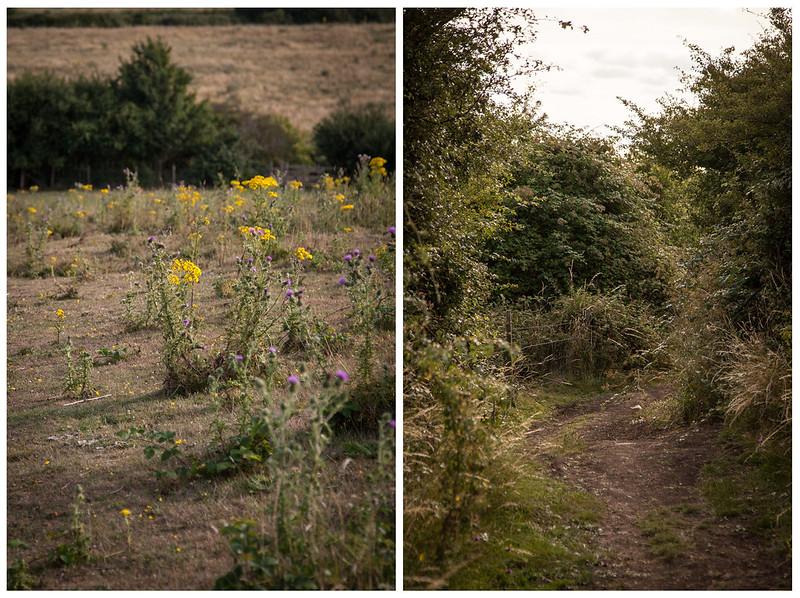 Hadleigh Countryside