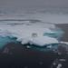 Polar bear on sea ice