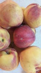 fruit tree(0.0), pluot(0.0), apple(0.0), peach(1.0), produce(1.0), fruit(1.0), food(1.0), nectarine(1.0),