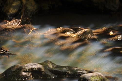 shadow ga stream shade shallow fultoncountyga cochranmillstatepark