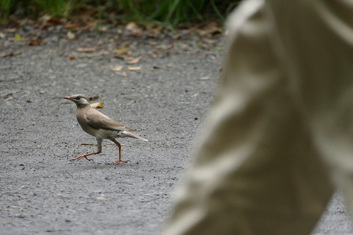 walking bird