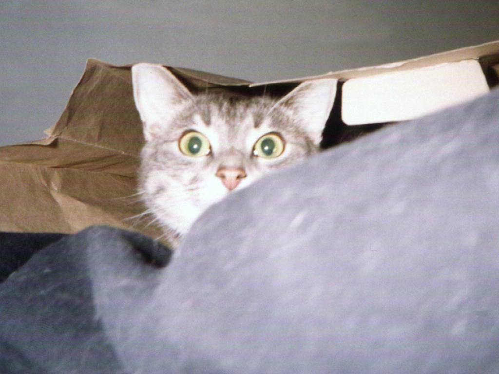 smoggy's second love was playing in bags. First love... sleep