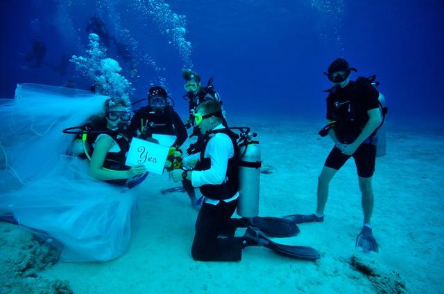 underwater-wedding-theanimals