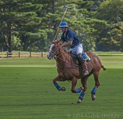 Polo at Bethpage State Park