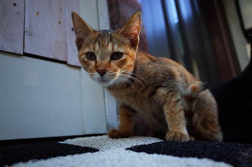 Cat In Tateishi