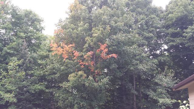turning_leaves