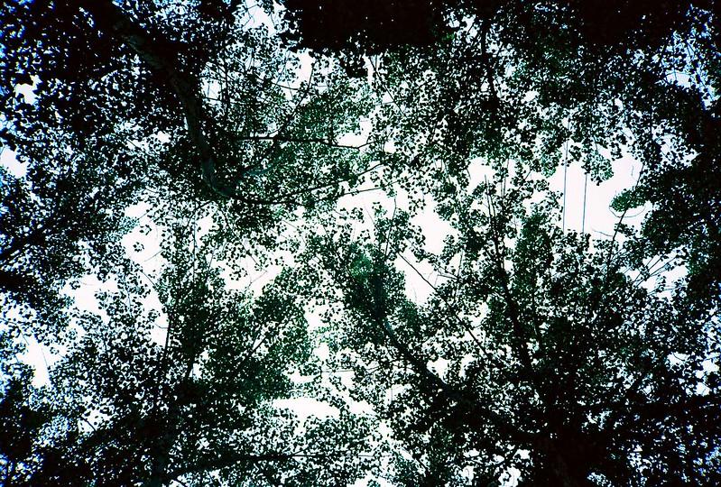 69/365: 798 Trees