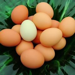 TrackHead Studios - Green Eggs