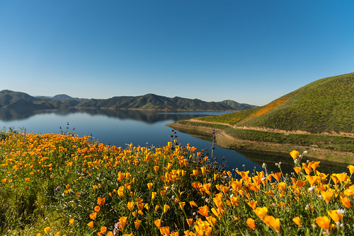 diamond valley wildflowers water nature poppies orange purple super bloom