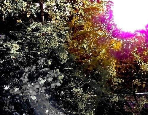 Tons... #meuolharemfotos #ednelsonfotografia #edjss #fotografia #foto #photo #flowersphotography #flores #flowers #natureza #nature #garden #jardim #photography #naturephotography #meioambiente #enviroment #tons #luz #light #color #outono #criatividade #m