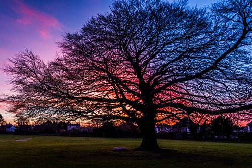 sunset marchsunset gonzagacollegesj gonzagacollegesjdublin copperbeech treeatsunset
