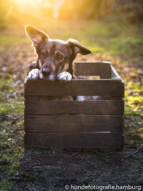 dog-in-the-box