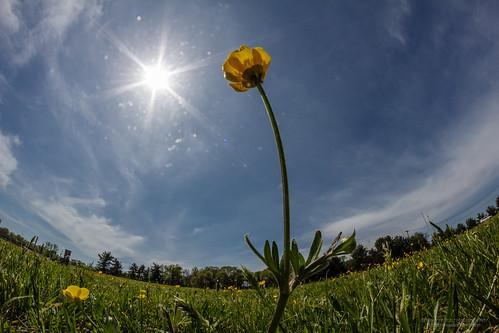 sky sun flower grass newjersey unitedstates lawn fortdix