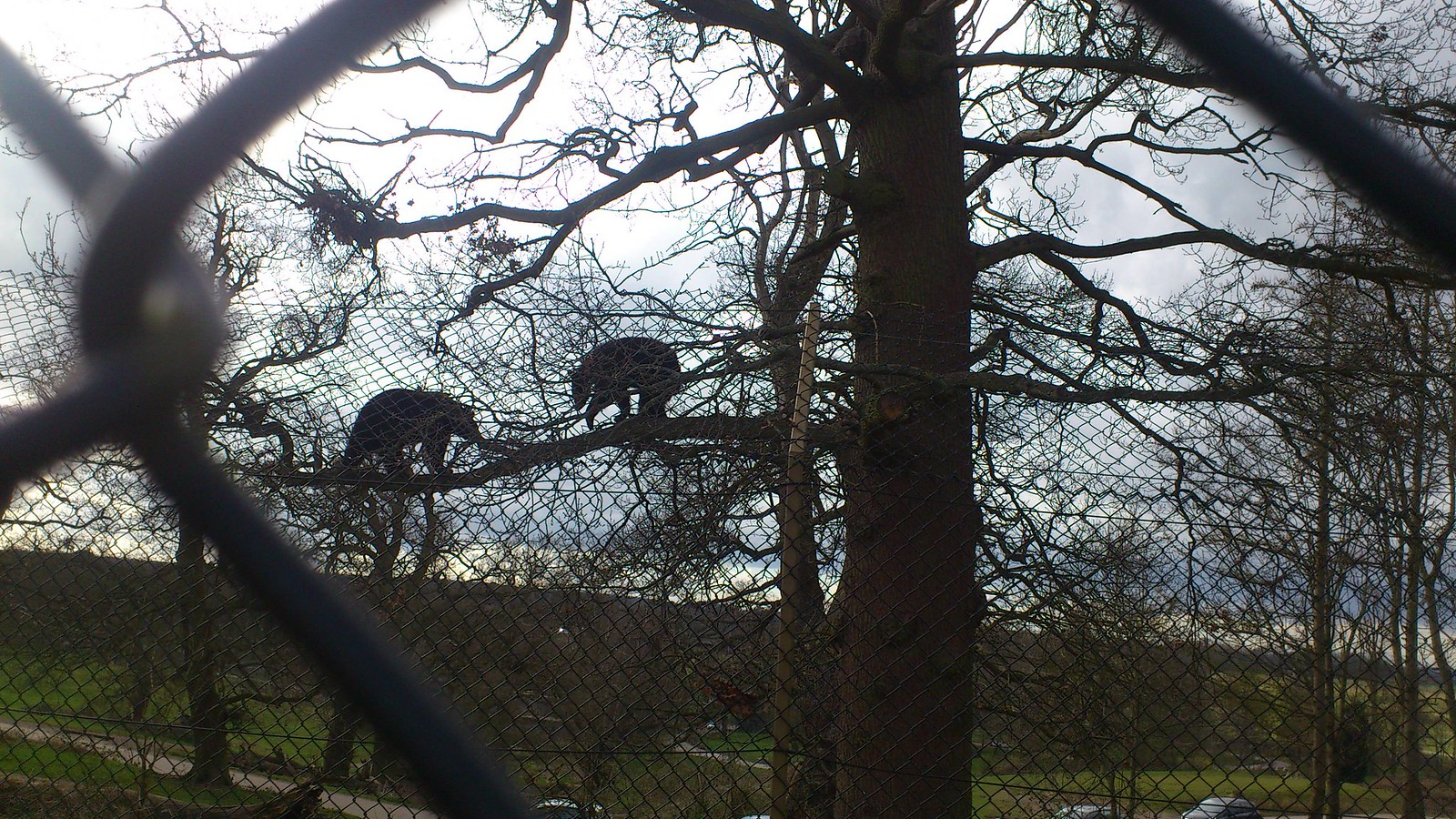 Black Bears (Bow Brickhill to Woburn Sands)