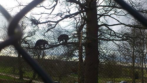Black Bears (Bow Brickhill to Woburn Sands)
