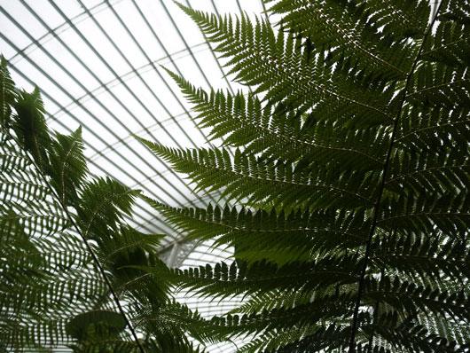 botanical-gardens2
