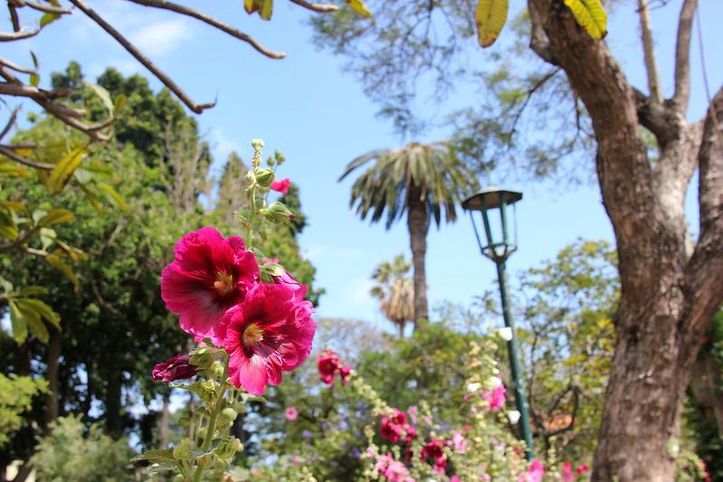 Madeira, Funchal 2014 + ostokset 087
