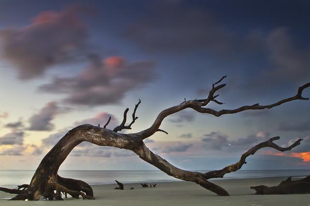 tree & clouds