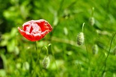 Fleurs, plantes, arbres et champignons
