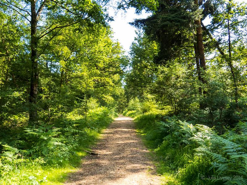 Path through Broadley Inclosure