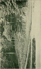 """Image from page 32 of """"East Carolina Teachers College Summer Term 1922"""" (1922)"""