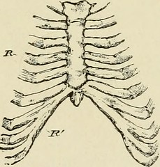 "Image from page 204 of ""The Bible and science"" (1881)"