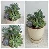 Succulent container garden #dishgarden #succulent #succulentarrangment