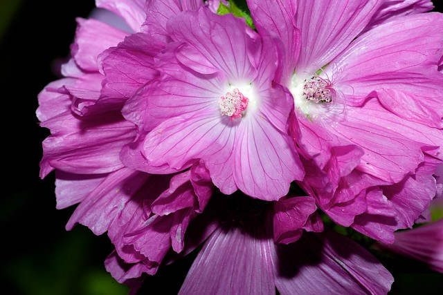 2014:07:10 - Glasgow Botanic Gardens - Sigma 180mm Macro - 028