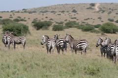 Experience a safari at Nairobi National Park - Things to do in Nairobi