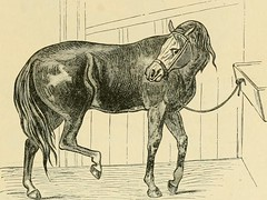 """Image from page 526 of """"The standard horse book, comprising the taming, controlling and education of unbroken and vicious horses"""" (1895)"""