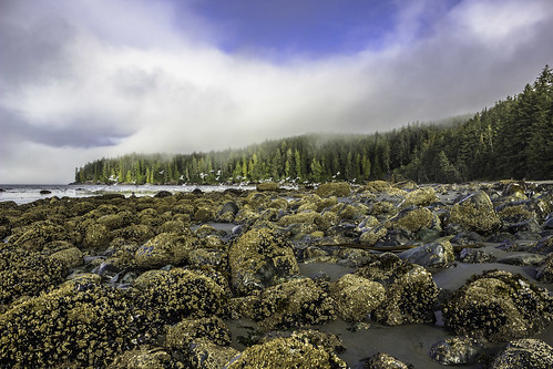 trees sky texture beach water fog clouds rocks vancouverisland chinabeach