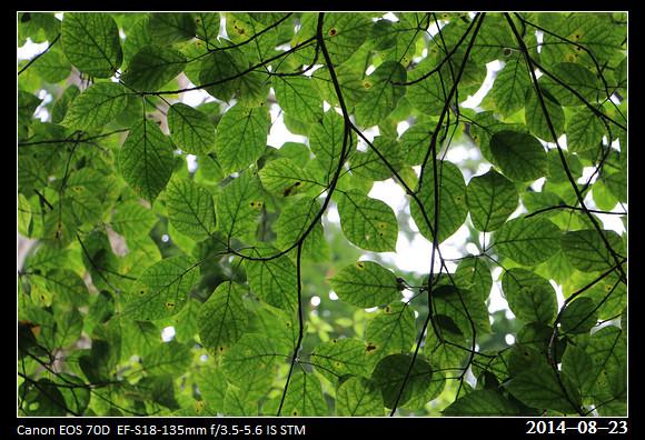 20140823_Green