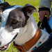 140525 Greyhound Extravaganza-0149